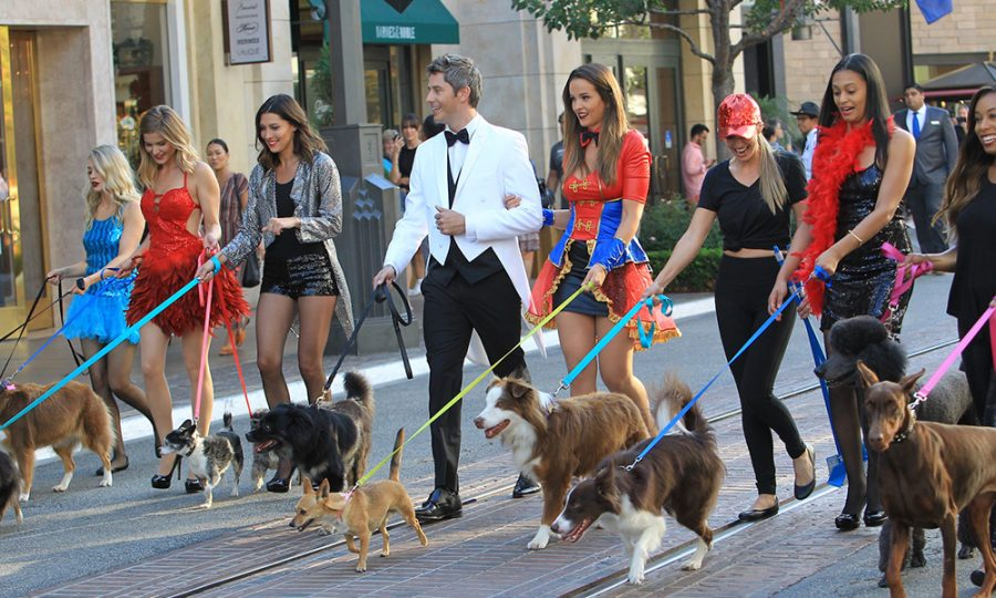 Bachelor Week 3 Recap: Wrestlemania and dog park fiascos