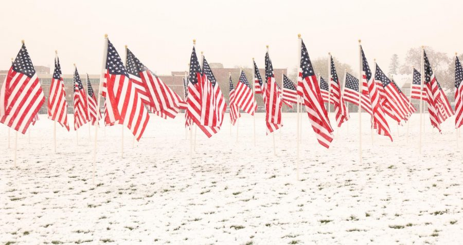 Flags stand outside of York demonstrating American pride for Veterans day. Photo by Michael Moriarty