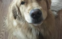An HR complaint from my two-year-old Golden Retriever